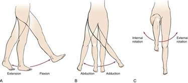 joint flexion rotation anatomy picture 2