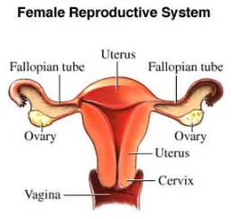 question on aging of the reproductive sysyem picture 19