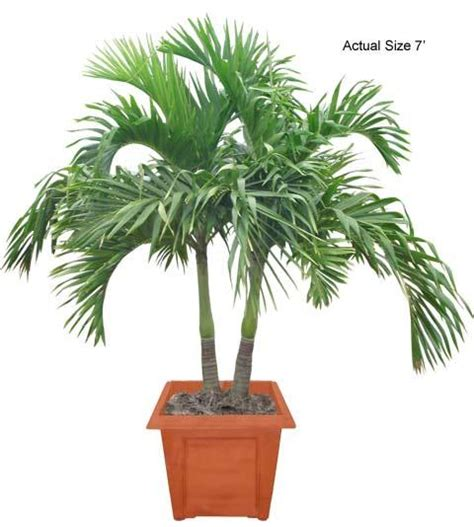 where to buy potted plants in metro manila picture 12