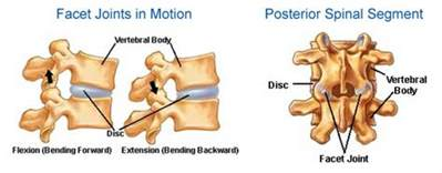 facet joint picture 11