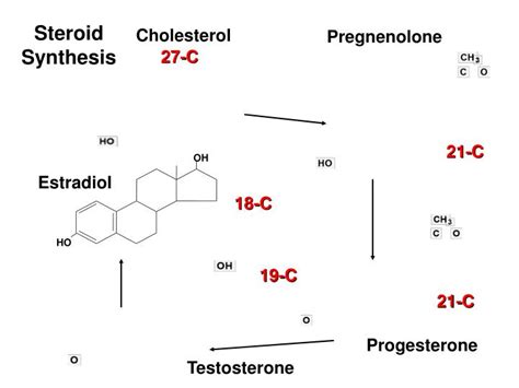 testosterone and estrogen can be cl ified as what type of picture 5