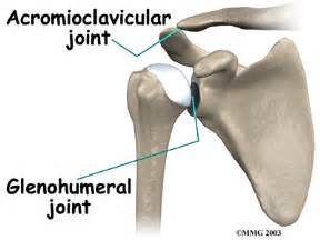 glenohumeral joint picture 6