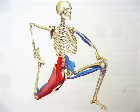 hip flexor muscle pull picture 7
