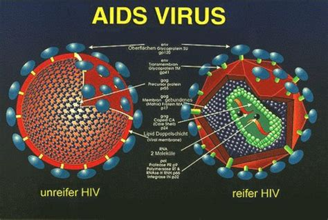 bank of america hiv virus picture 7