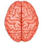 blood flow areas, human brain picture 10