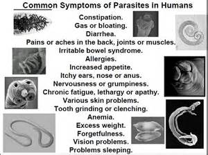 colon and intestines parasites picture 2