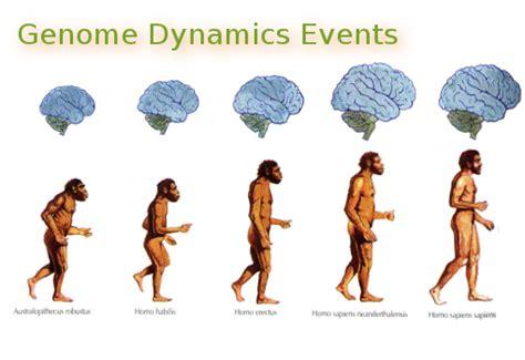 pheromones effect on brain picture 6