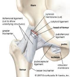 hip joint pops and has pain picture 7