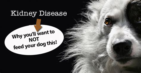 canine diet for kidney disease picture 1