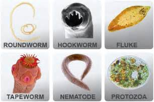 colon and intestines parasites picture 3