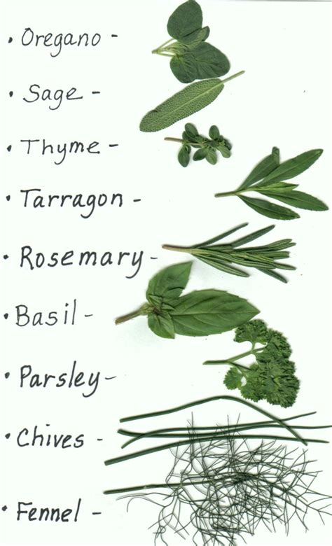 can you get caught using herbal clean on picture 7