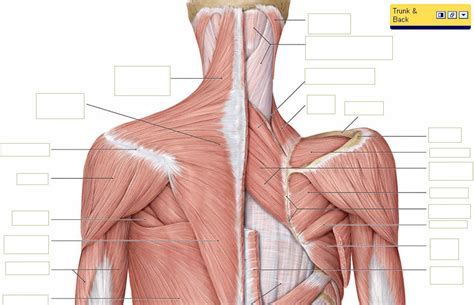 can you get pain in neck back and picture 1
