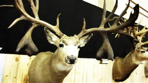 world record world's biggest deer rack picture 10