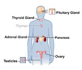 menstruation + thyroid picture 11