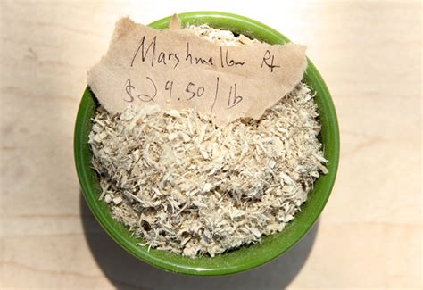 marshmallow root joint pain picture 6