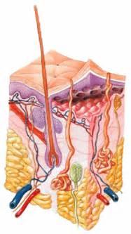 skin picture picture 6