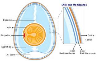 cell skin reproduction picture 13