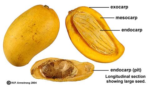 how to eat papaya seeds picture 11