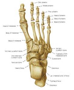 anatomy picture 1