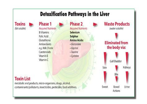what are hive liver levels picture 7