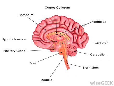 define: thyroid gland picture 7