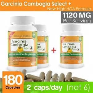 garcinia cambogia fruit for sale picture 15