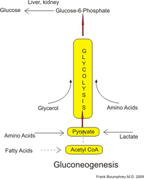 amino acids for blood flow picture 1