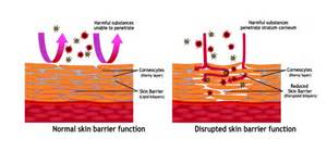 skin functions picture 17