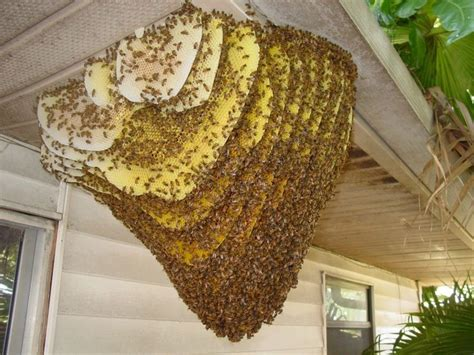 honey bee hives picture 6