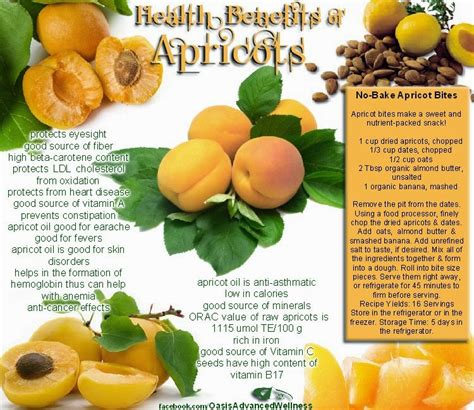 apricots health picture 13
