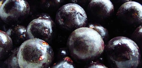 acai wild berry picture 13