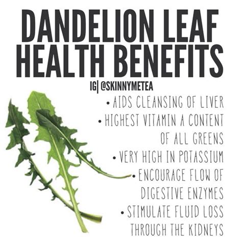 red dandelion greens health benefits picture 1