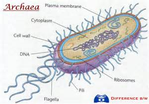 what is bacterial v picture 13