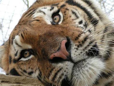 feline picture 15
