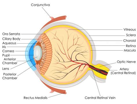 pus in the eye medical term picture 9