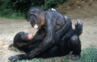 sex girl with monkey online picture 6