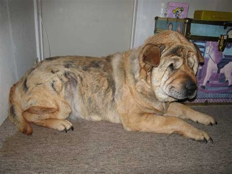 fear in dogs thyroid picture 9