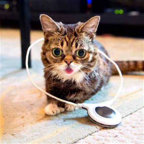 feline pain relief picture 9
