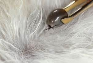 how to remove ticks from skin picture 7
