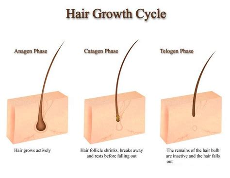 remove genital hair increase penis size picture 8