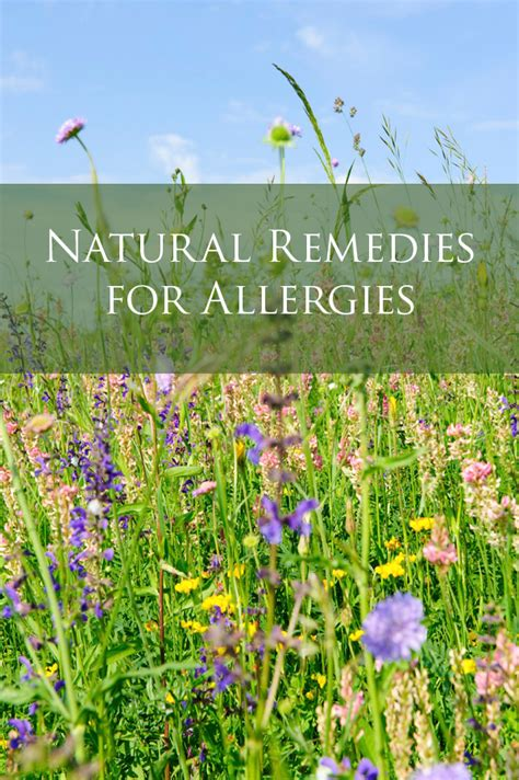 herbal remedies for allergies picture 10
