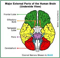 major components of the psychological aspect aging picture 15