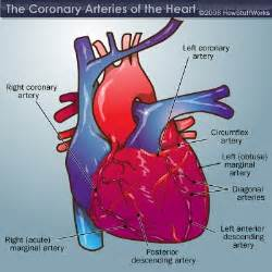 blood flow to h picture 9