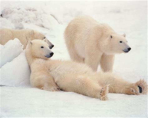 noukie blue soothe a sleep bear picture 11