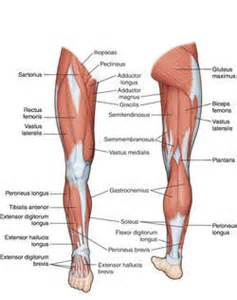 muscle in legs disease picture 18