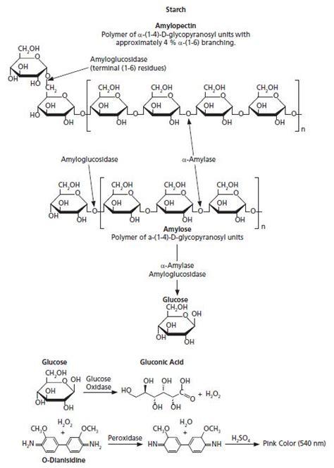 alpha amylase amylose digestion picture 11