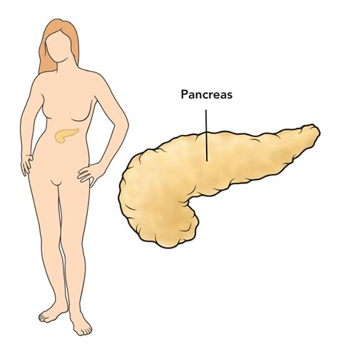 aging and pancrease picture 6