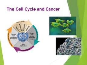 pictures of skin cancer cell cycle picture 2
