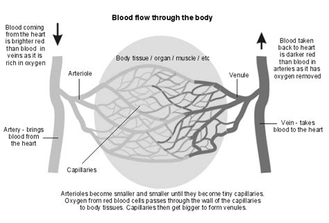 blood clot inmuscletissue from trauma picture 1