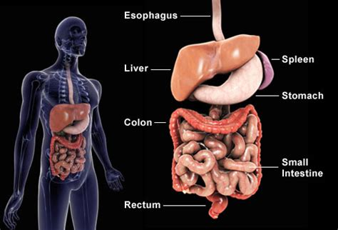 colon health is your colon free from disease picture 8